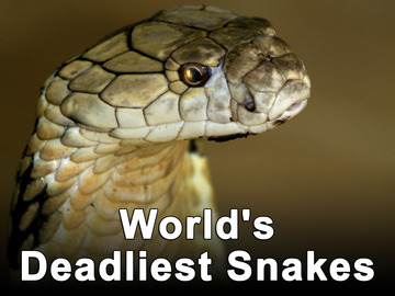 HCS(OUR DREAM): Top 8 World's Deadliest Snakes