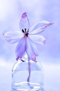 flor en jarron - mifrasedeldia