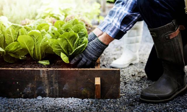 Menanam Sayuran Organik Di Rumah