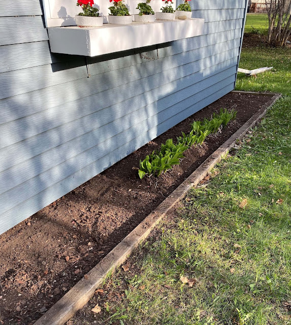 Photo of foundation garden bed cleaned up