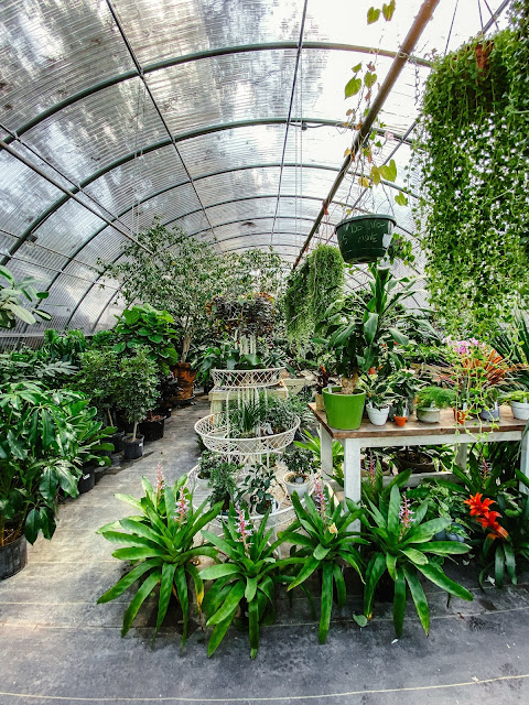 Tillery Street Plant Co. Greenhouse