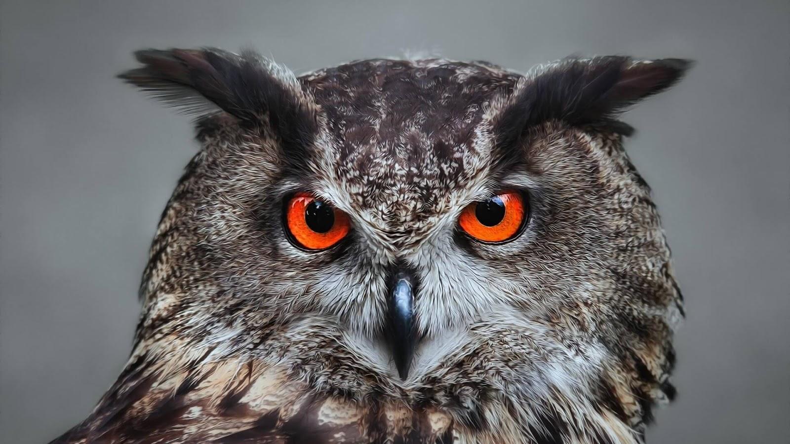 owl red eyes wallpaper