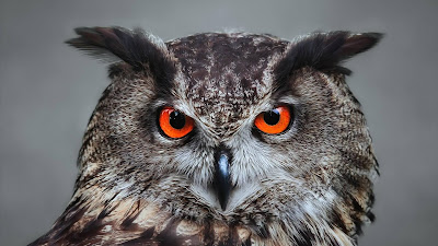 owl red eyes hd wallpaper
