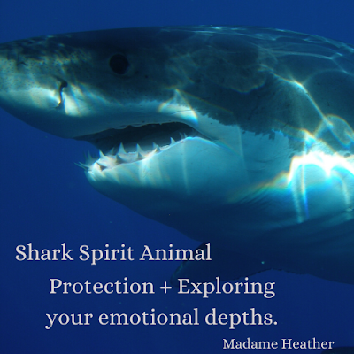 Shark medicine