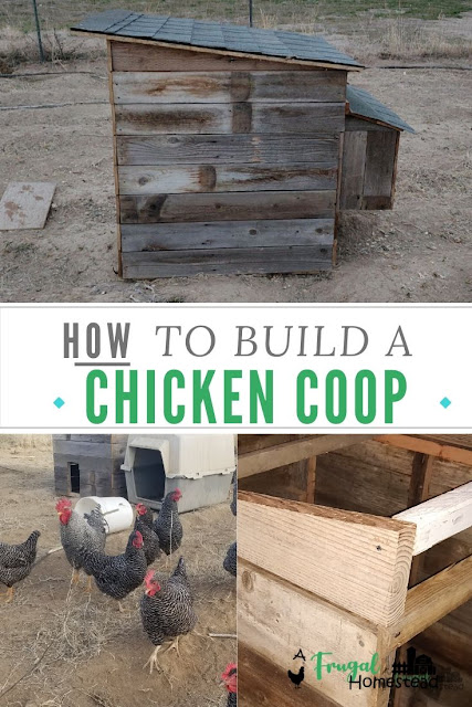 How to build a chicken coop out of pallets and old fence slats to make an easy chicken coop.