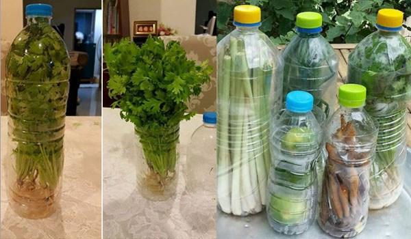 Tahukan Bunda, Cukup Menggunakan Botol Bekas, Sayuran di Rumah Bisa Tahan Lebih Lama dan Tetap Segar. Begini Tipsnya!!