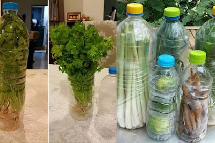 Cukup Menggunakan Botol Bekas, Sayuran di Rumah Bisa Tahan Lebih Lama dan Tetap Segar. Begini Tipsnya!!