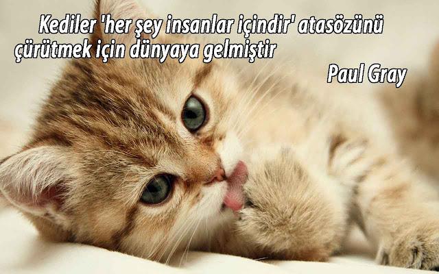 kediler hakkında sözler