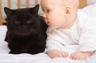 Cuidados para bebés cuando están alrededor de los animales
