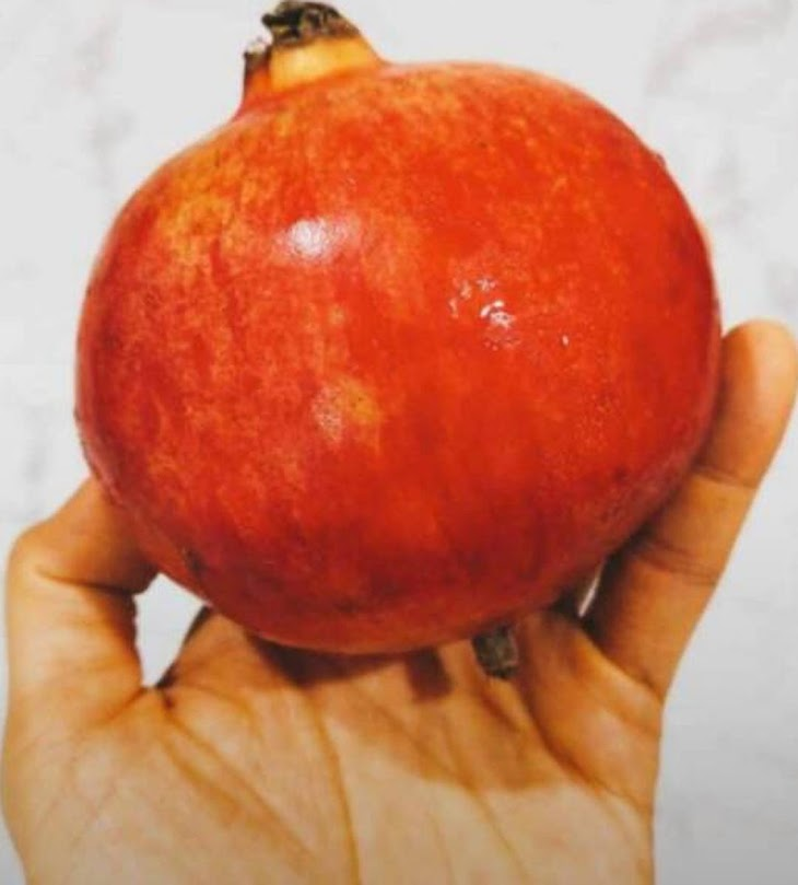 Delima Merah Pomegranate Kendari