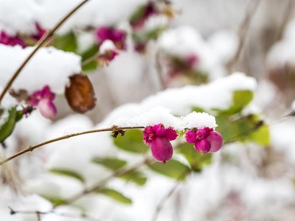 Schneezauber im Garten