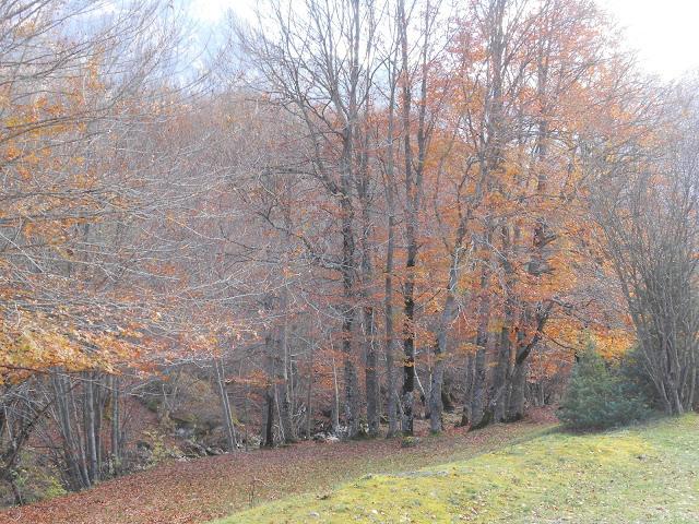 Il bosco poco lontano dalla strada che porta al piazzale della Camosciara
