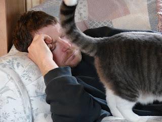 Por qué los gatos te muestran el trasero