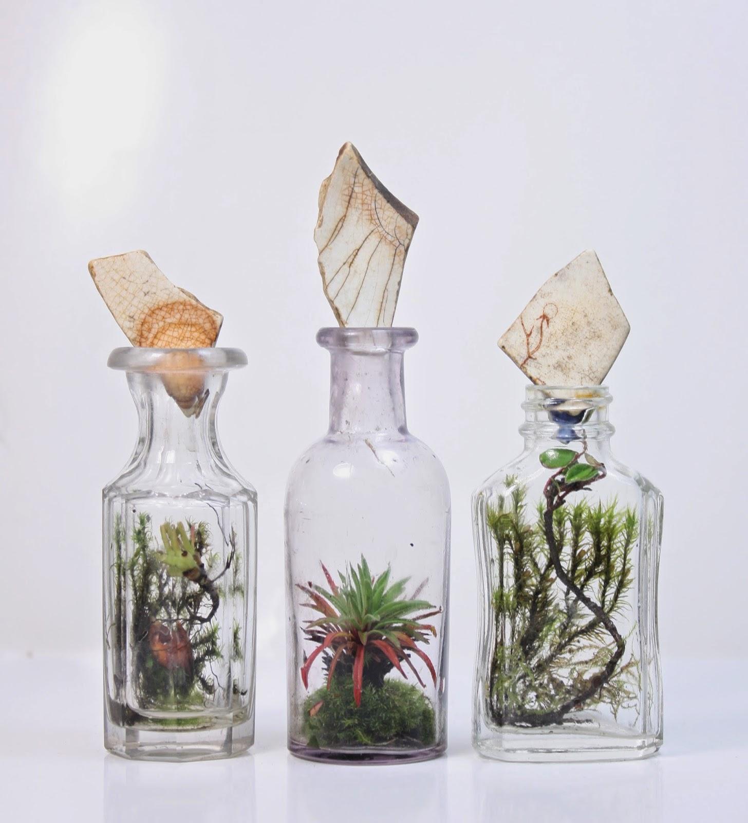 terrarium-sise-dekor-botanik