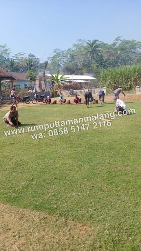 Pasang rumput gajah mini dan jepang di Mojosantren Sidoarjo tahun 2021