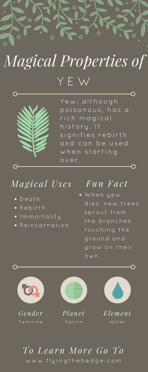 Magical Properties of Yew