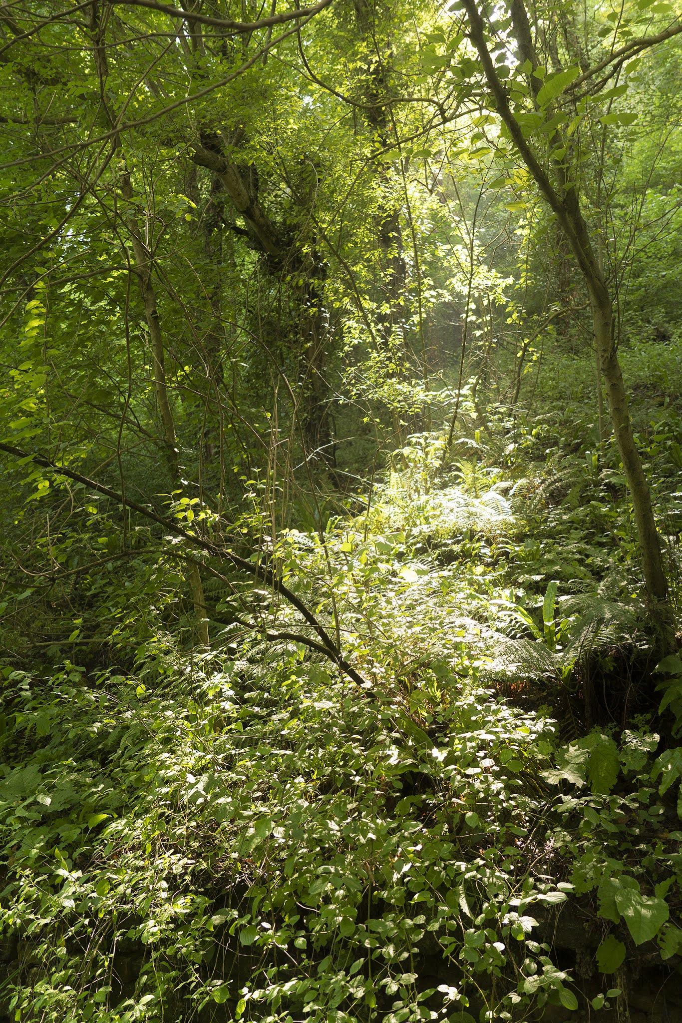Sochi forest road to waterfall sun ray summer photo Igor Nocik