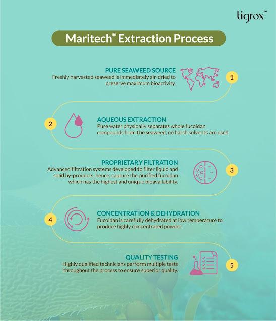 MARITECH Organic Fucoidan Extraction process before included into Tigrox IMUGLO