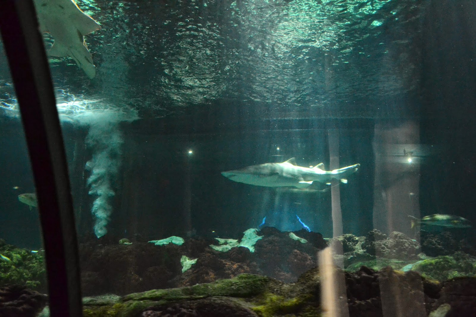 Sharks Exhibit at Seaworld Orlando