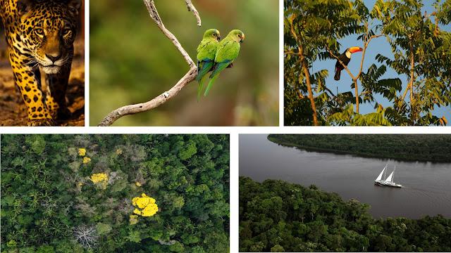 A Floresta Amazônica brasileira é nossa!! - Fora!! ONGS internacionais - Cabe às autoridades do Brasil preservá-la com leis duras.