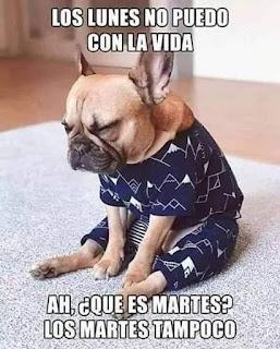 Perro cabizbajo con pijama