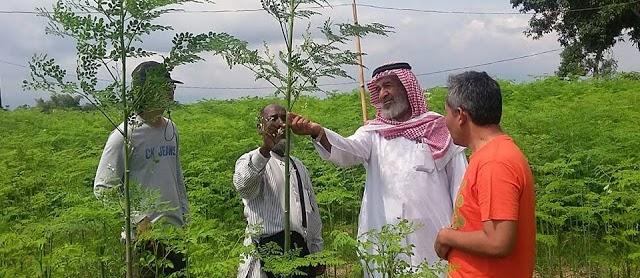 Sayur Daun Kelor Indonesia Tembus Pasar Dunia Dengan Harga Rp250.000/Kg Nya