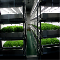 vườn rau sạch thông minh