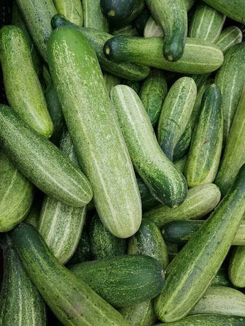 a bunch of cucmbers