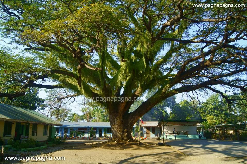 Pagnapagna Quot Trees Amigos Quot Of La Union With Three Things