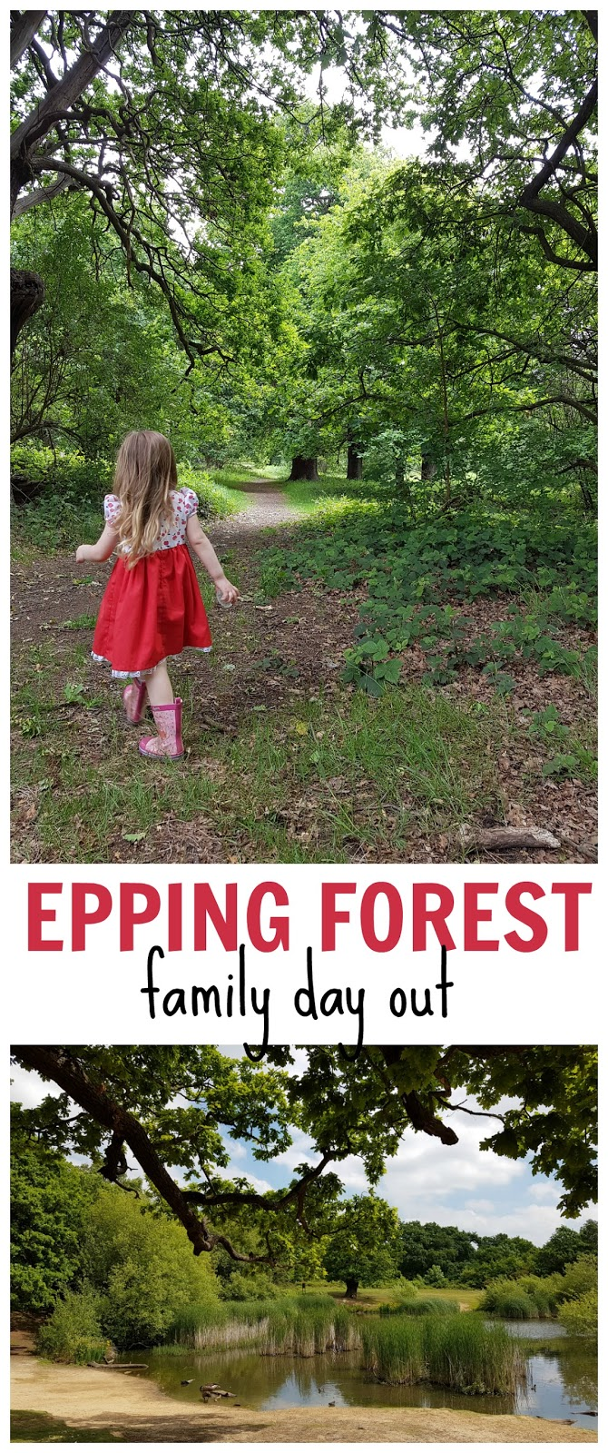 A free family day out at Epping Forest, London - ideas where to go when you are at Chingford, Queen Elizabeth's Hunting Lodge, and lots of pictures of the type of things you might find in Epping Forest, London.