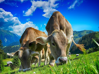 الزراعة في الاتحاد الأوروبي ليست قابلة للحياة في المستقبل