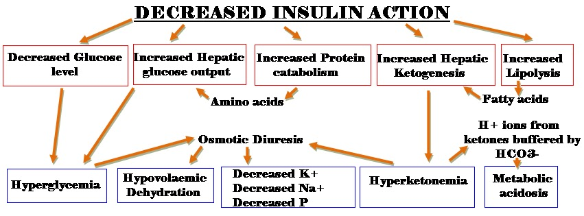 symptoms and treatment of diabetic ketoacidosis | diabetes, Skeleton