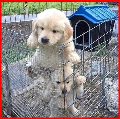 Como Curar Heridas De Perros En Las Patas
