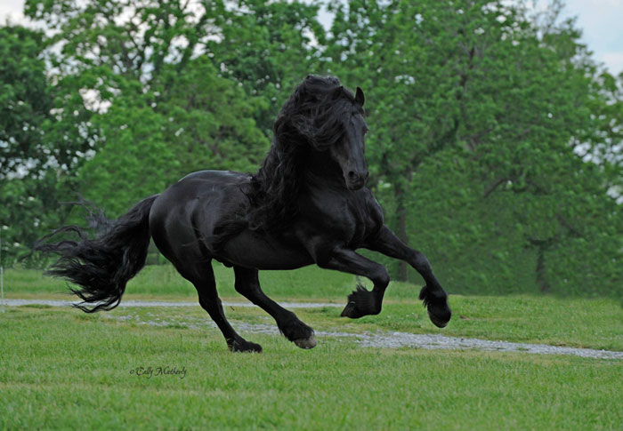 Frederik the Great: The Most Handsome Horse In The World