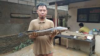 Warga Jakarta Selatan Ini Menemukan Ikan Lele Besar