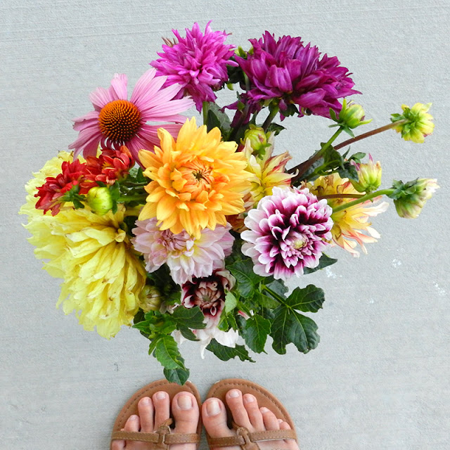 dahlia summer flower photography