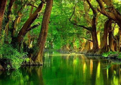 Gambar Terindah Pemandangan Alam Dunia Sungai di Tengah Hutan Rindang Hijau