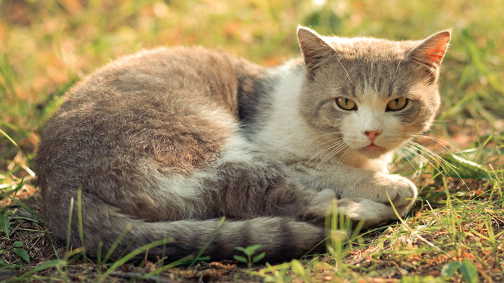 cat-illness-symptoms