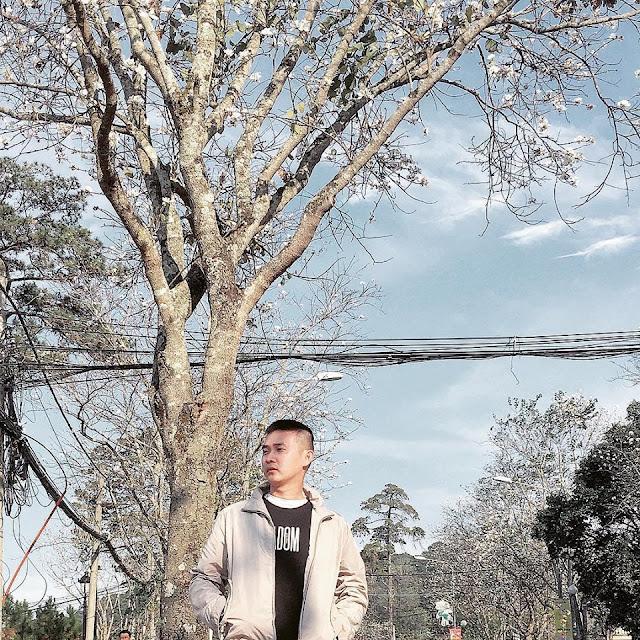 Tháng 1 hoa ban nở trắng trời Đà Lạt đẹp tựa như trong tranh 1