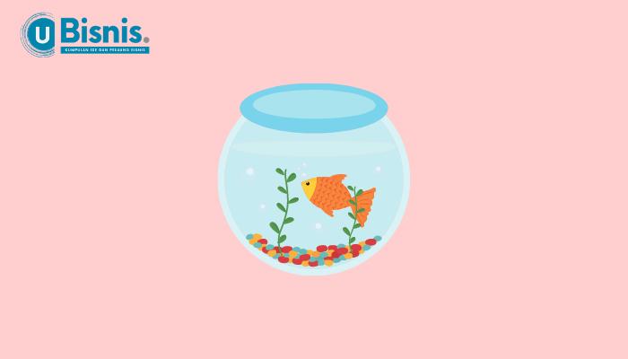 Ikan Hias yang Kuat Hidup di Air Tawar