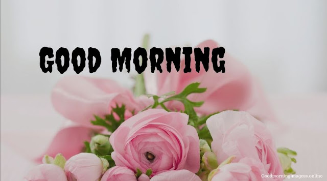 Good Morning Images In Roses 12