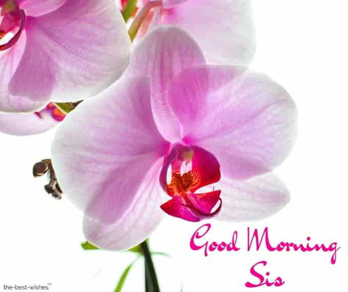 good morning sis photos