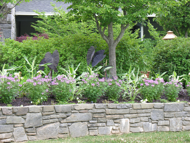 home gardening and landscaping