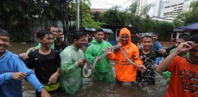 Jangan Panik, Jika Ada Ular Saat Banjir Segera Hubungi Relawan Ini