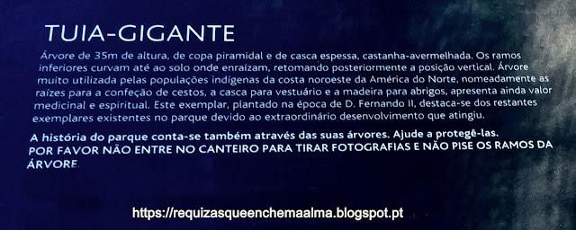Tuia Gigante, Parque do Palácio da Pena, Sintra