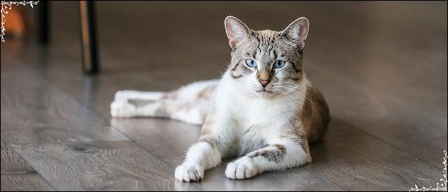 En Güzel 55 Farklı Kedi Türleri,Cinsleri,Irkları ve Özellikleri  >>>