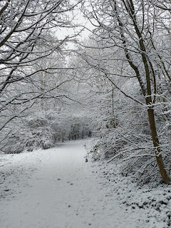 A Snowy Path through the Woods