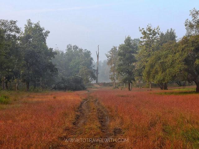 Satpura forest