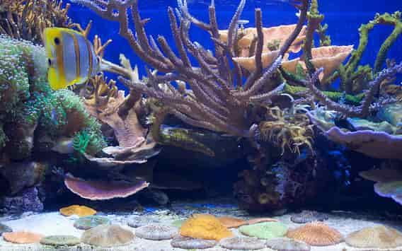 Saltwater fish selection