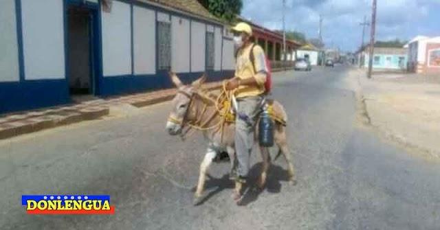 En Cumarebo vuelven  a sacar a los burros porque se acabó la gasolina